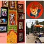 Chuy's Mexican Food is More Than a Kitschy Face!