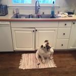 My Kitchen Needs Help: A Kitchen Makeover Story