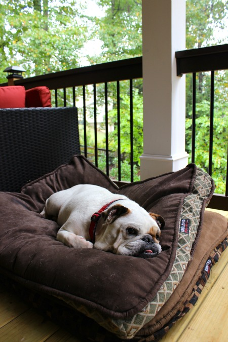 Doo relaxes on his new deck