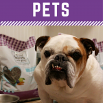 5 Holiday Gift Ideas for Pets