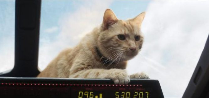 Captain Marvel's Cat is a Flerkin... so is the MIB cat.