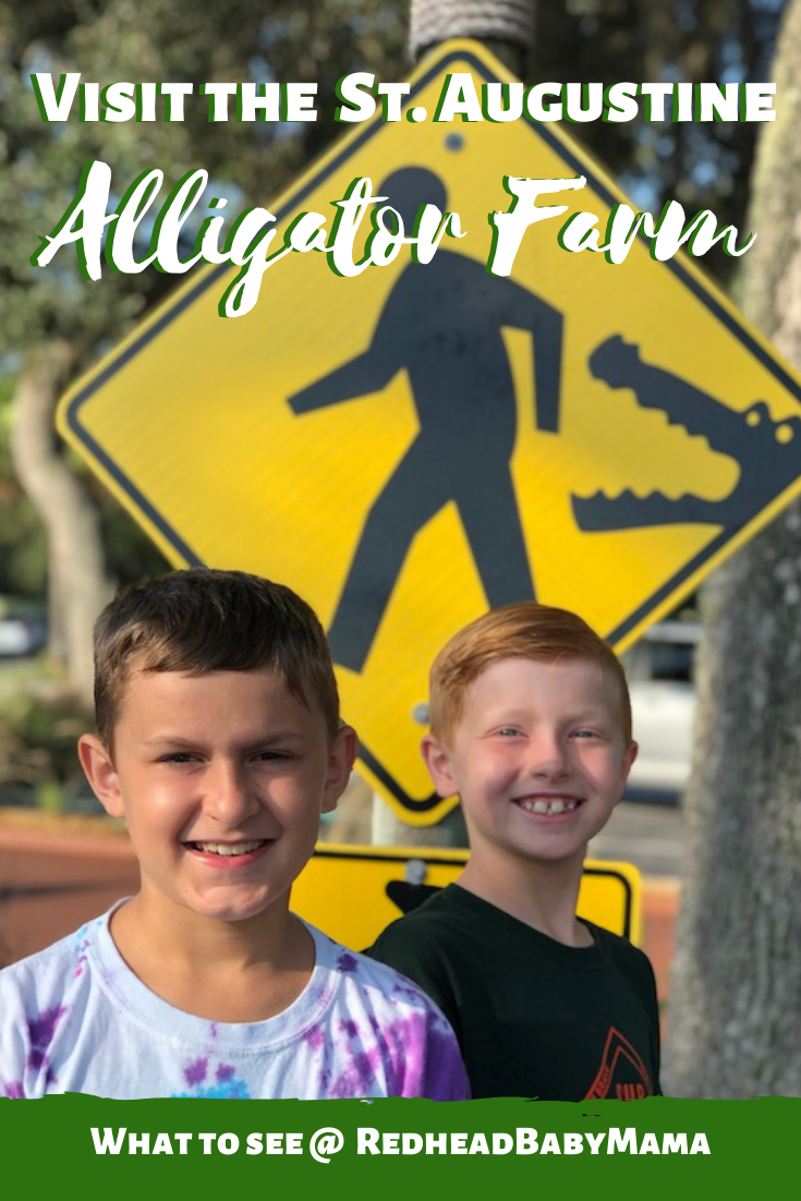 St Augustine Alligator Farm Pin - Visit with your Kids