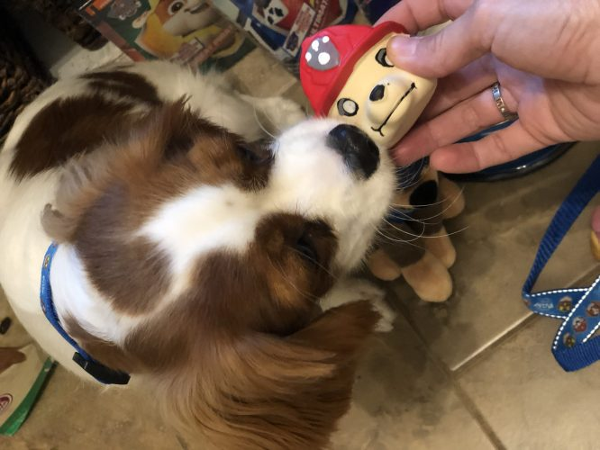marshal toy PAW Patrol: Pups Save the Kitten Catastrophe Crew